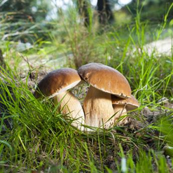grzyby-jako-remedium-na-rozne-choroby